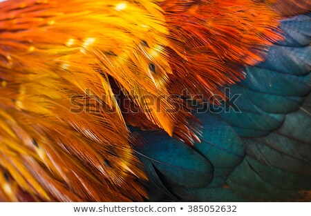Hen feathers detail Stock photo © smithore