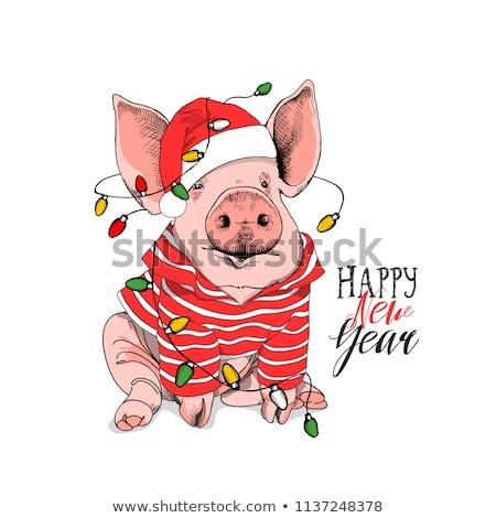 komik · domuzlar · örnek · sevmek · mutlu · domuz - stok fotoğraf © adrenalina