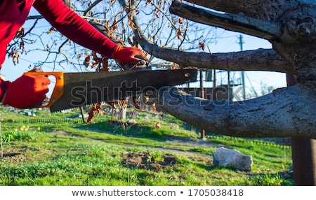 Young men on logs in the forest Stock photo © deyangeorgiev