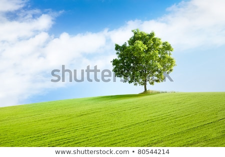 Tree On Grassy Hill Stock fotó © italianestro