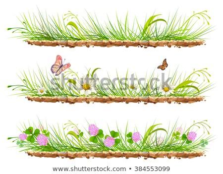 fleurs · herbe · coccinelle · isolé · blanche · résumé - photo stock © orensila