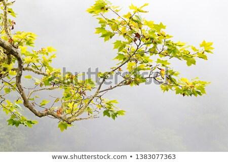Eenzaam boom mist natuur landschap veld Stockfoto © Digifoodstock
