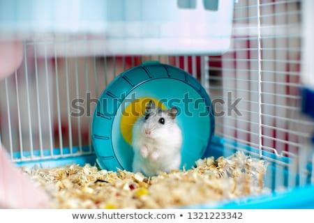 хомяк клетке иллюстрация животного игры Cartoon Сток-фото © adrenalina