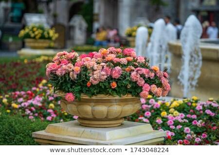 blanco · Splash · flores · flores · blancas · leche · verde - foto stock © raywoo