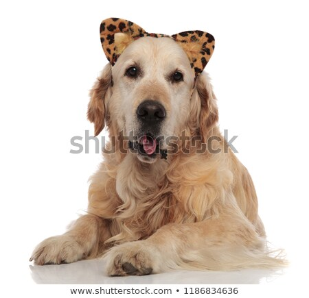 lovely dog with tongue exposed and animal print headband Stock photo © feedough