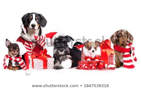 Gelukkig hond huisdier cartoon illustratie Stockfoto © izakowski