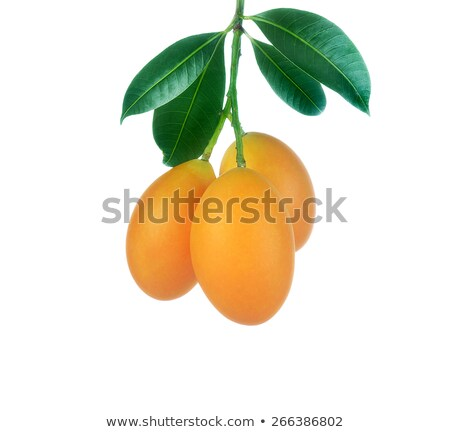 sweet marian plum thai fruit isolated on white background mayon stock photo © ungpaoman