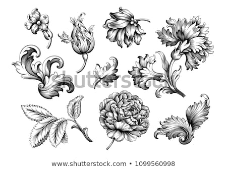 Heraldic Floral Filigree Pattern Scroll Design Set Stock photo © Krisdog