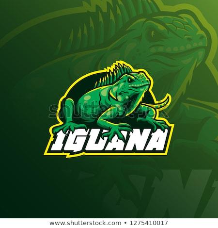 Desenho animado iguana zangado ilustração verde jovem Foto stock © cthoman