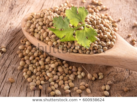 Coriander seeds (fruits of Coriandrum sativum), paths Stock photo © maxsol7