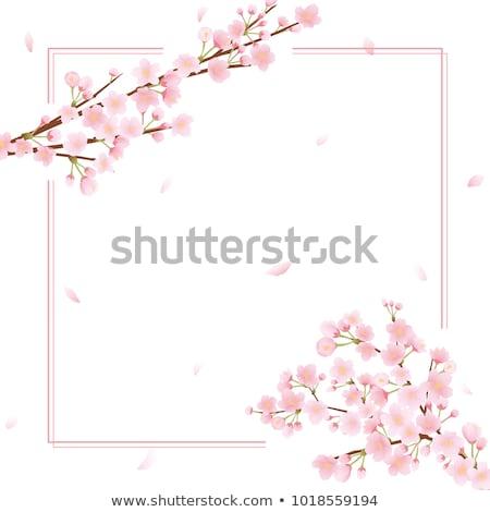 Cherry tree blooming border Stock photo © Anna_Om