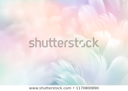 Purple background with feathers Stock photo © blackmoon979