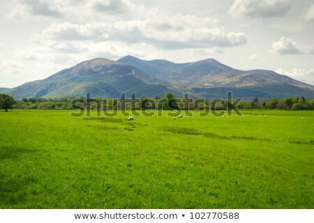 Carnero naturaleza escena ilustración feliz fondo Foto stock © bluering