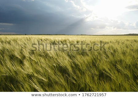 Agriculture, cultivated field with dark clouds in spring Stock photo © simazoran