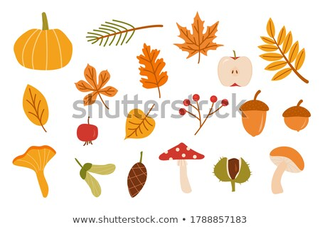 vector set of mushrooms Foto stock © olllikeballoon