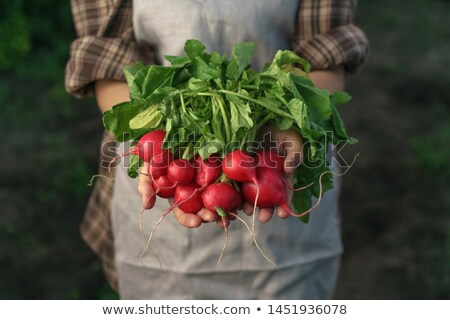 Close-up of fresh picked radish on rustic Stock photo © dariazu