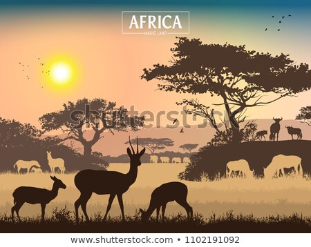 Aves savana africano céu sol Foto stock © liolle