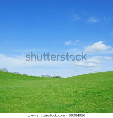 Lebendig grünen Gras Frühling Bereich fluffy weiß Stock foto © Leonidtit