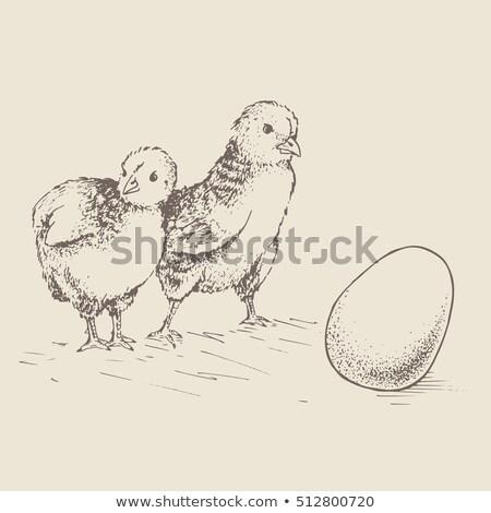 Weinig cute chick uit ei cartoon Stockfoto © liolle