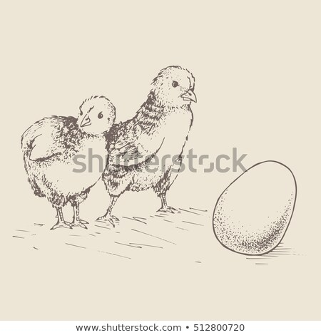 мало Cute куриного из яйцо Cartoon Сток-фото © liolle