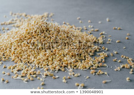 Pile of sprouted green buckwheat on grey background. Germinated raw vegetarian product. Growing spro Stock photo © vkstudio