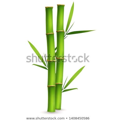 бамбук два изолированный белый фон зеленый Сток-фото © photosil