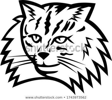 Hoofd noors bos kat mascotte zwart wit Stockfoto © patrimonio