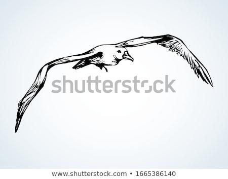 Zeemeeuw vogel Geel muur eilanden Stockfoto © dmitry_rukhlenko
