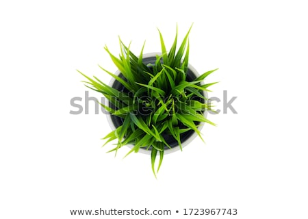 pot with grass and flowers stock photo © adamson