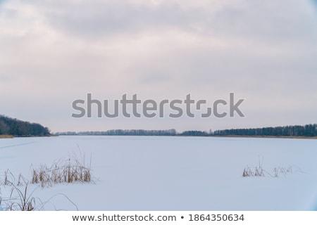Zimą rano śniegu zewnątrz scena Zdjęcia stock © jeremywhat