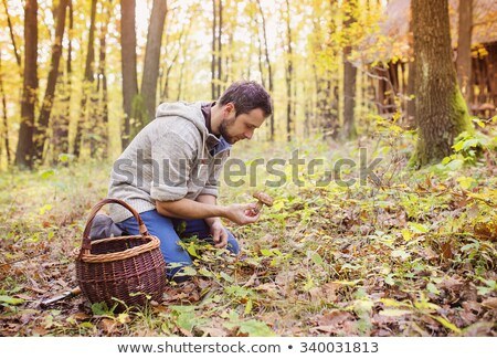 man picking mushrooms in the forest stock photo © photography33