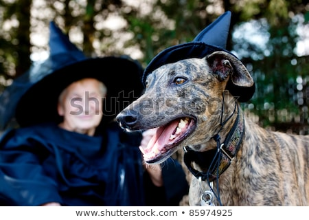 Senior lady with greyhound Stock photo © Melpomene