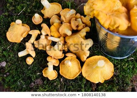 Chanterelles in Yellow Bucket Stock photo © zhekos