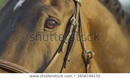 лошади · красивой · зеленая · трава · пейзаж - Сток-фото © garethweeks