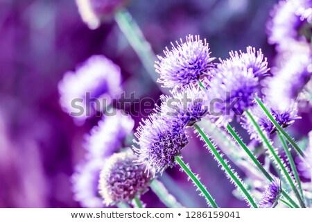 çiçek · beyaz · doğa · yaz · renk - stok fotoğraf © zhukow