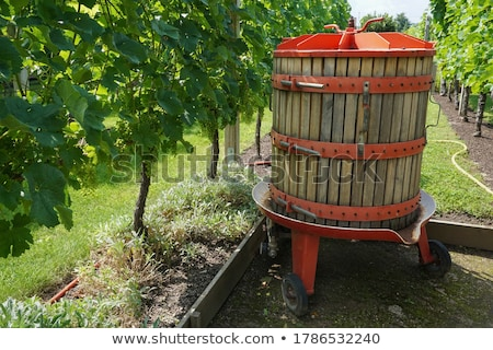 grape press Stock photo © xedos45