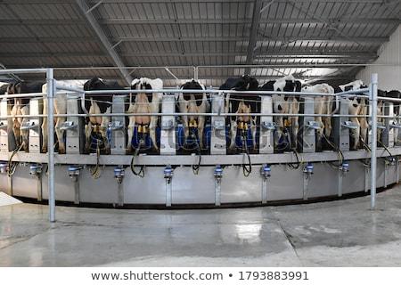 mechanical milker Stock photo © vwalakte