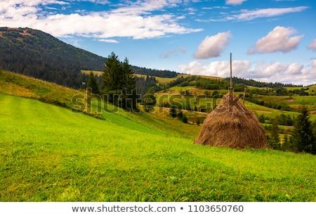Hooiberg weide zomer landschap platteland hemel Stockfoto © taden