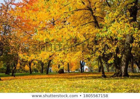 Autumn city park Stock photo © hraska