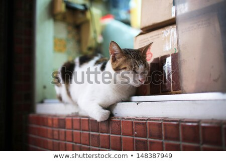 adorable Calico cat lying on the street , calico,paw, puss, feline, striped Stock photo © lewistse