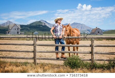 White Horse Beside a Fence stock photo © rhamm