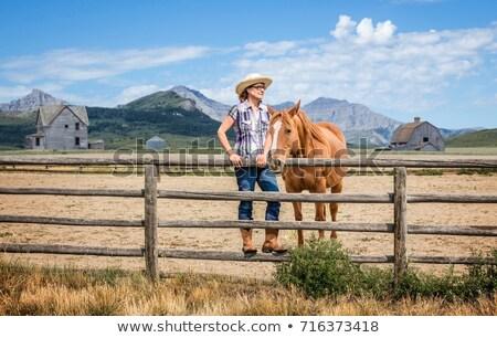 White Horse Beside a Fence Stock photo © rhamm