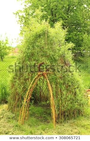 willow door to small children house stock photo © jonnysek