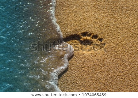 Stok fotoğraf: Insan · ayak · izleri · plaj · kum · su · yürüyüş