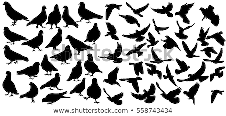 White silhouettes of doves Stock photo © gomixer