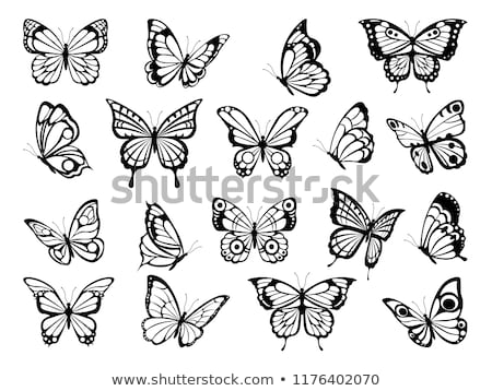 silhouettes of exotic butterflies stock photo © blackmoon979