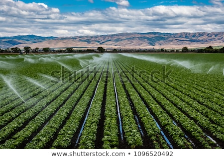Farm irrigation sprinkler Stock photo © njnightsky