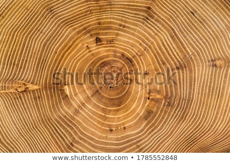 Full frame fából készült felület barna textúra bútor Stock fotó © prill