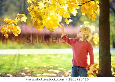 Mały ciekawy chłopca jesienią lasu portret Zdjęcia stock © Anna_Om