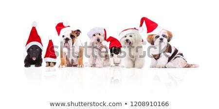 Groep zeven aanbiddelijk honden verschillend Stockfoto © feedough